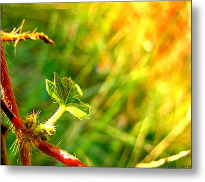 Metal Print featuring the photograph A New Morning by Debbie Portwood