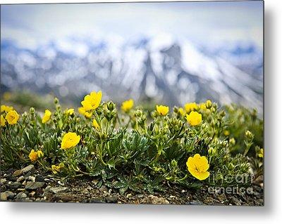 Alpine Meadow In Jasper National Park Metal Print by Elena Elisseeva
