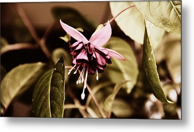 Metal Print featuring the photograph Antiqued Fuchsia by Jeanette C Landstrom