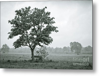 August In England Metal Print by Andy Smy