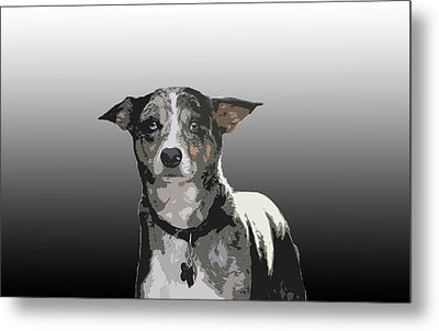 Australian Cattle Dog Sheltie Mix Metal Print by One Rude Dawg Orcutt