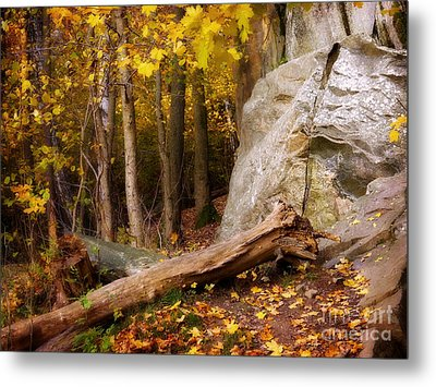Autumn Forest Day Metal Print by Lutz Baar