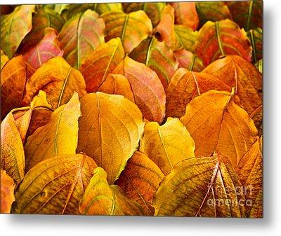 Autumn Leaves  Metal Print by Elena Elisseeva