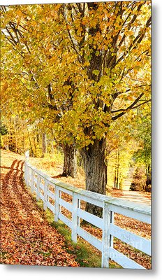 Autumn Leaves Metal Print by HD Connelly