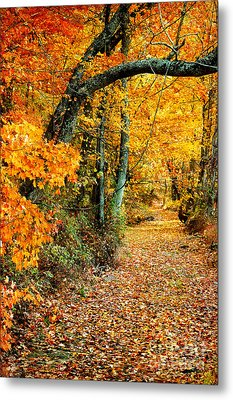 Autumn Pathway Metal Print by Cheryl Davis