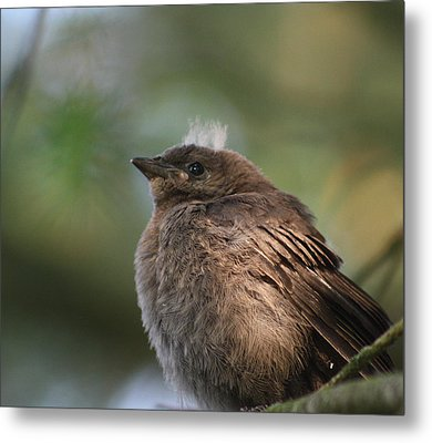 Baby Bird Metal Print by Cathie Douglas