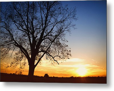 Bare Tree At Sunset Metal Print by Skip Nall