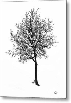 Bare Winter Tree Metal Print by Michael Flood