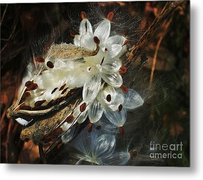 Metal Print featuring the photograph Beautiful Nature 2 by Jasna Gopic