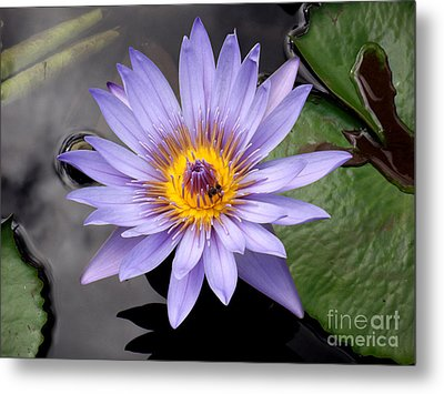Metal Print featuring the photograph Bee With Me by Ayasha Loya