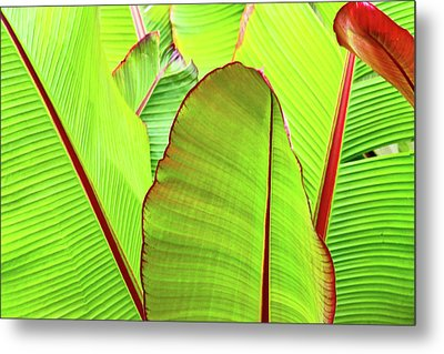 Metal Print featuring the photograph Bird Of Paradise by Ann Murphy