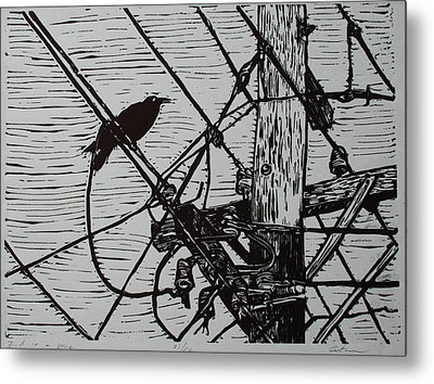 Bird On A Wire Metal Print by William Cauthern
