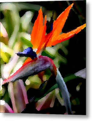 Birds Of Paradise  Metal Print by Elizabeth  Doran