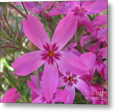 Blissful Metal Print by Tina Marie