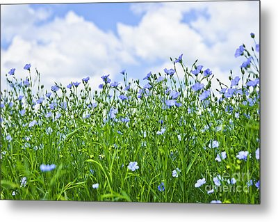 Blooming Flax Field Metal Print by Elena Elisseeva
