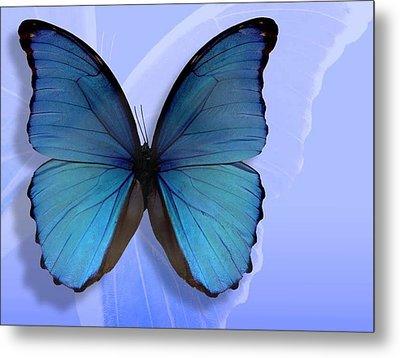 Blue Butterfly Metal Print
