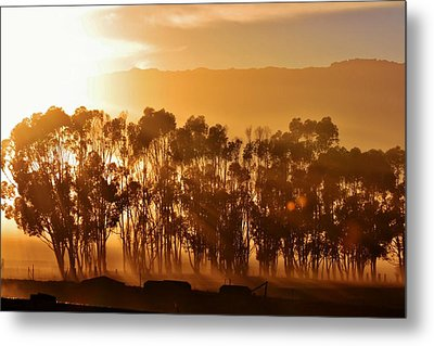Metal Print featuring the photograph Blue Gum Trees by Werner Lehmann