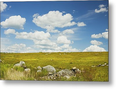 Blue Sky And Clouds Over Blueberry Farm Field Maine Metal Print by Keith Webber Jr