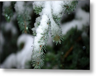 Bokeh Of Evergreen In Snow Metal Print