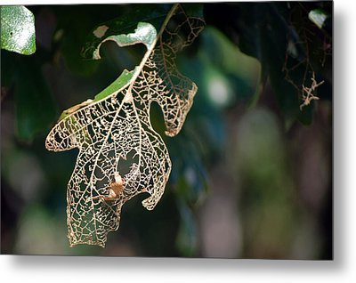 Bokeh Of Leaf Metal Print