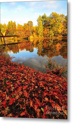 Burst Of Colors Metal Print by Catherine Reusch Daley