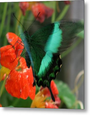 Butterfly Abstraction Metal Print by Valia Bradshaw