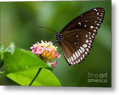 Metal Print featuring the photograph Butterfly by Fotosas Photography