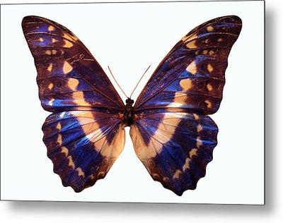 Butterfly Metal Print by John Foxx