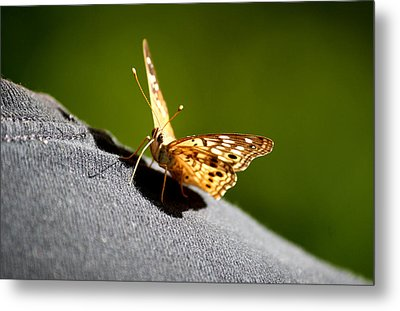 Butterfly Kisses Metal Print by Karen Scovill