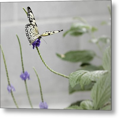 Metal Print featuring the photograph Butterfly by Nick Mares