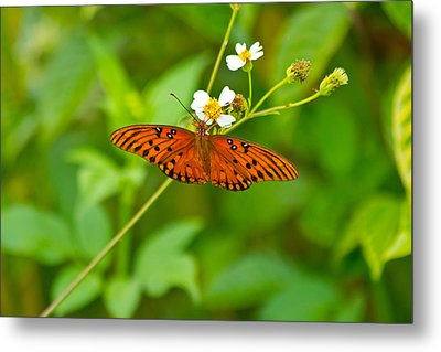 Butterfly Metal Print by Wild Expressions Photography