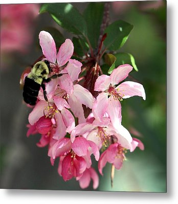 Metal Print featuring the photograph Buzzing Beauty by Elizabeth Winter