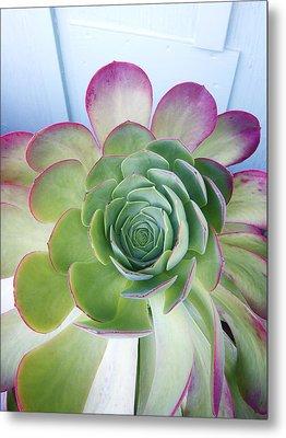 Cactus Metal Print by Patricia Granlund