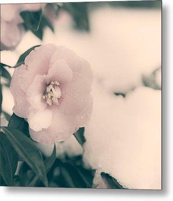 Camellia Metal Print by Joana Kruse