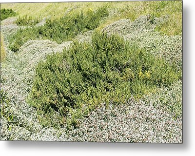 Coastal Vegetation Metal Print by Adrian Bicker