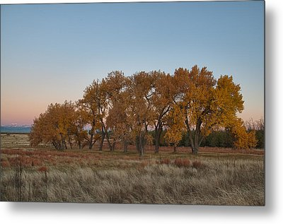 Metal Print featuring the photograph Cottonwood Grove by Monte Stevens