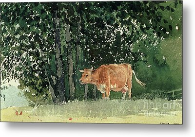 Cow In Pasture Metal Print by Winslow Homer