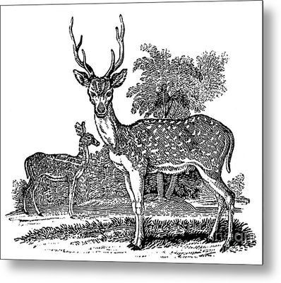 Deer Metal Print by Granger