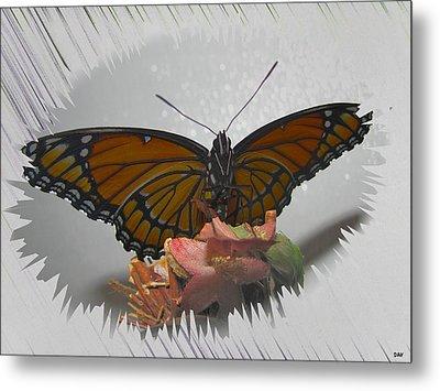 Designer Butterfly Collection Metal Print by Debra     Vatalaro