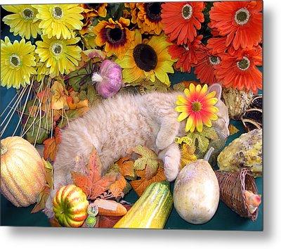 Di Milo - Flower Child - Kitty Cat Kitten Sleeping In Fall Autumn Harvest Metal Print by Chantal PhotoPix