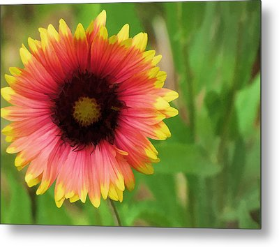 Metal Print featuring the photograph Enough Of The Flowers by John Crothers