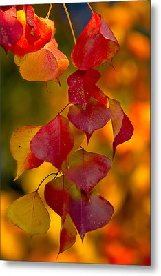 Metal Print featuring the photograph Fall Color 1 by Dan Wells