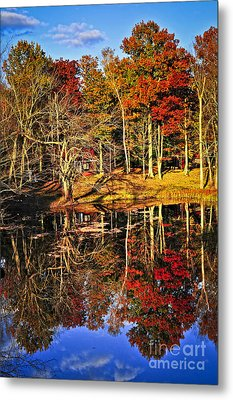 Fall Forest Reflections Metal Print by Elena Elisseeva
