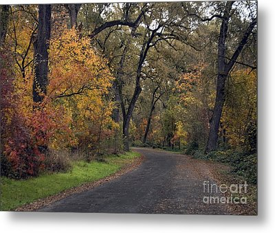 Fall In Bidwell Park Metal Print