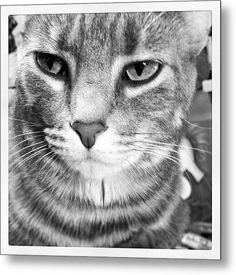 Fatty Metal Print