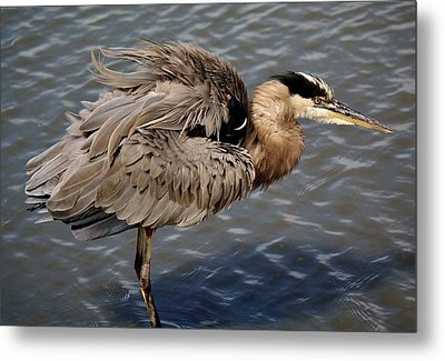 Feathers Metal Print by Paulette Thomas