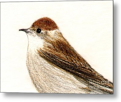 Metal Print featuring the drawing Female Blackcap  by Barbara Moignard