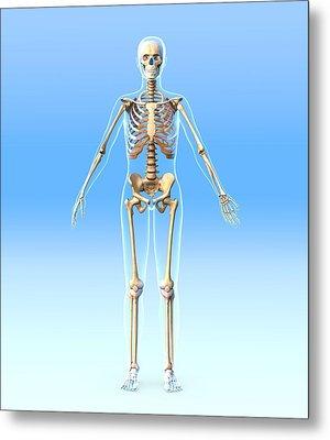 Female Skeleton, Artwork Metal Print by Roger Harris