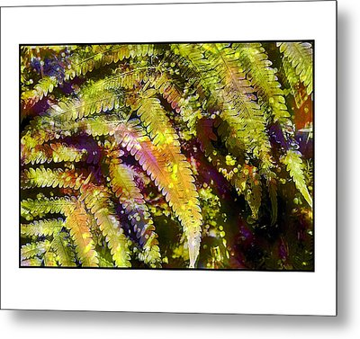 Metal Print featuring the photograph Fern In Dappled Light by Judi Bagwell