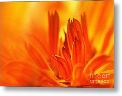 Fire Storm  Metal Print by Elaine Manley